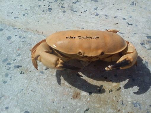 خرچنگ دکور